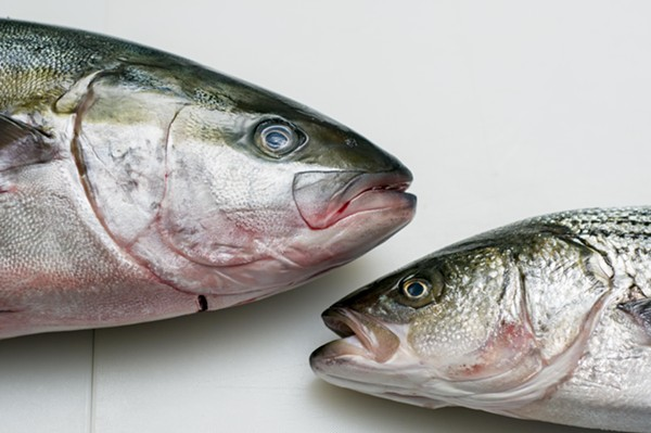 Yellowtail Hiramasa (left) and striped bass at Motor City Seafood. - TOM PERKINS