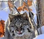 Acclaimed Wildlife Tracker Susan Morse