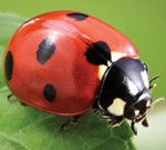 Free Seminar: Bees & Beneficial Insects