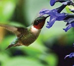 Free Seminar: Attracting Birds & Hummingbirds