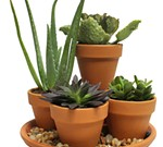 Make It & Take It Workshop: Succulent Garden
