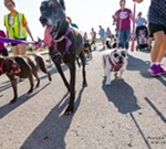 Mega March for Animals, presented by Sellers Subaru and guided by Canine to Five