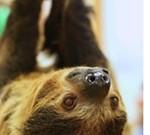 Creature Encounters - Sloth!