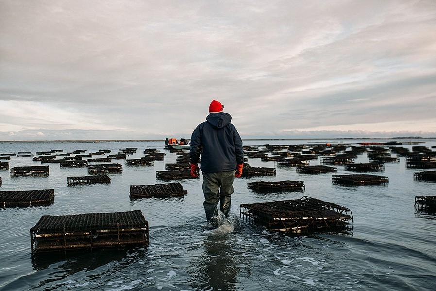 A December sunset at Massachusetts' Island Creek Oysters. - COURTESY OF ISLAND CREEK OYSTERS