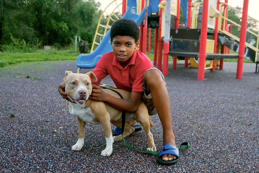 A boy plays with a bully breed dog at a park. - STEVE NEAVLING