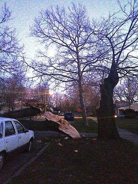 A photo of a split tree taken in the Jefferson-Chalmers neighborhood last night. - PHOTO COURTESY ANA GAVRILOVSKA
