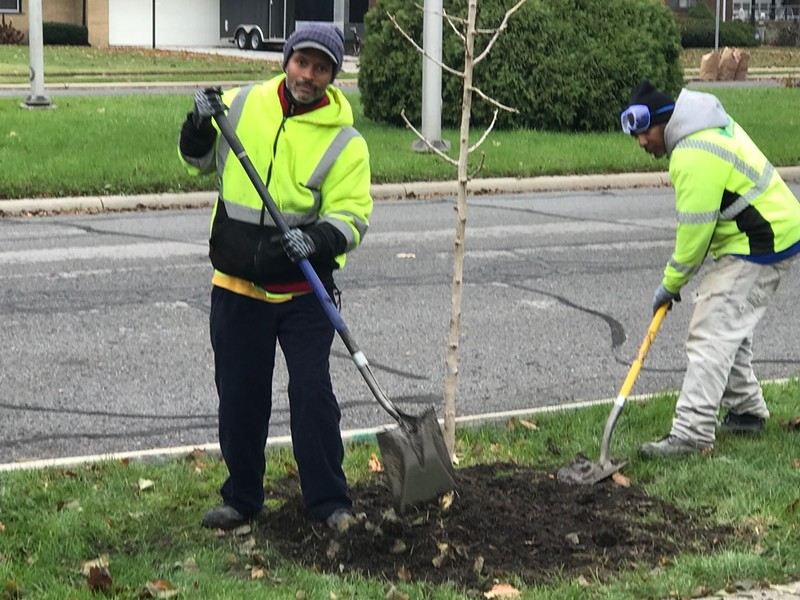 """Crews plant a tree in northwest Detroit as part of the """"10,000 Up"""" program. - COURTESY PHOTO"""