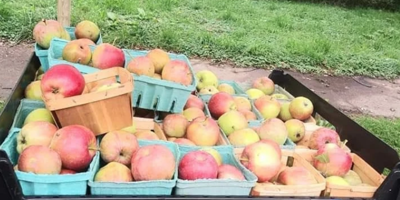 Detroit has a Black-owned cider mill now, complete with hayrides, goats, and fresh produce