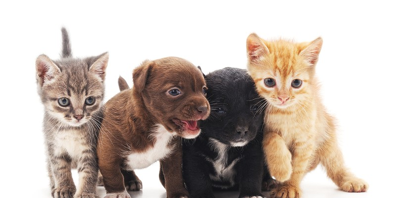 The most adorable kitties and puppies that you've ever seen.