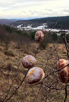 Twitter user shares photo of blooming Paczki trees in preparation of Fat Tuesday