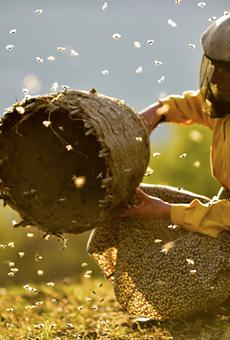 Cinema Detroit to host advance screening of lauded beekeeping doc 'Honeyland'