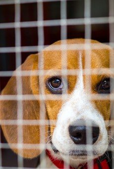 Bill aims to end painful experiments on dogs at Michigan public institutions