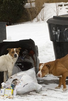 Stray dogs rummage through trash in Detroit.