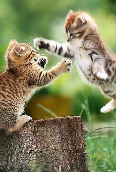 Cat war in Birmingham?