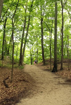 Winding trail through the forest in a Michigan state park.