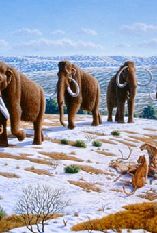 A start-up called Colossal raised $15 million to attempt to resurrect the woolly mammoth — well, sort of.