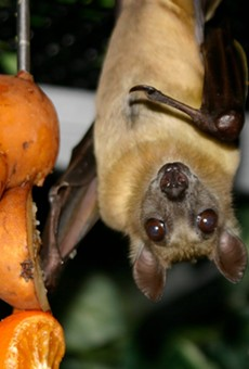 Detroit Zoo takes in animals displaced by sudden closure of Pontiac's Bat Zone