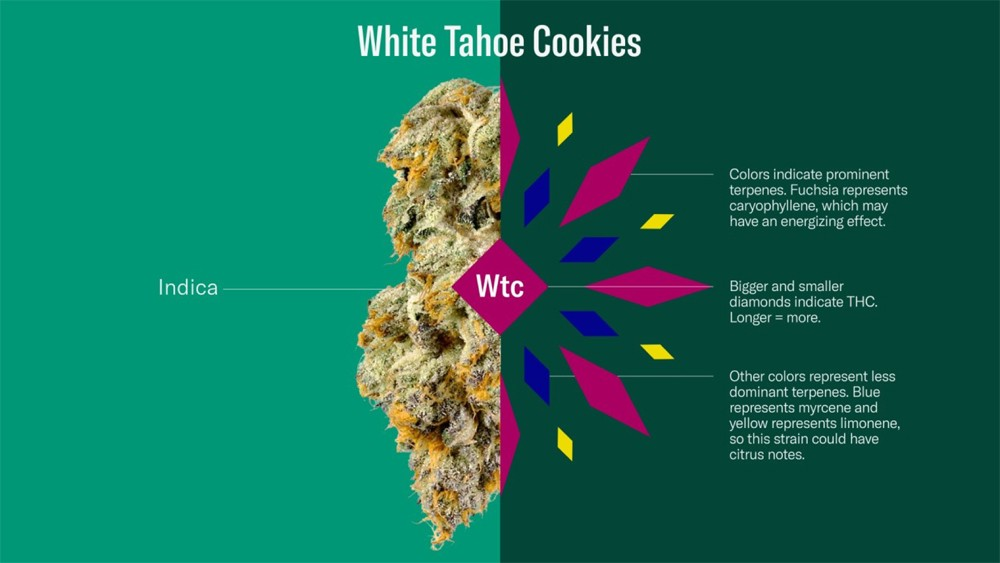 The size of the shapes corresponds to their potency. - COURTESY OF LEAFLY.COM
