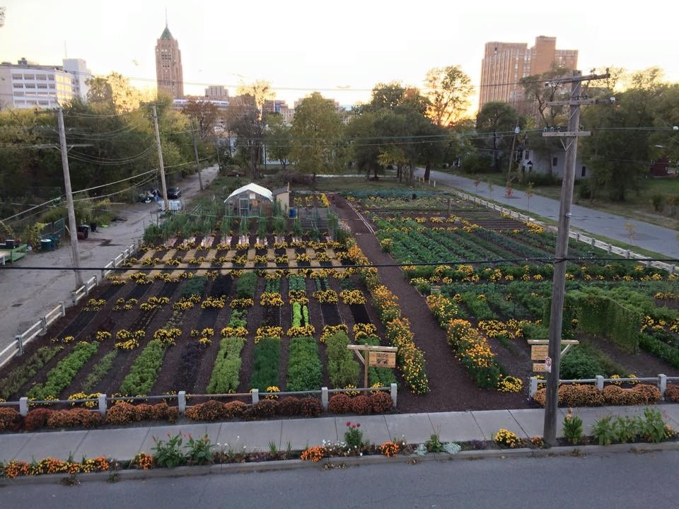 Detroit urban farm in first place to win 25k prize the Sun garden manufactured home community