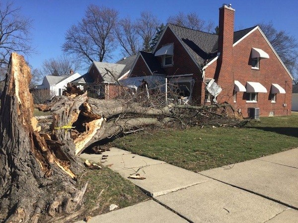 This tree in Dearborn was toppled by winds, doing limited damage to this home. - PHOTO COURTESY BILL SCHWAB