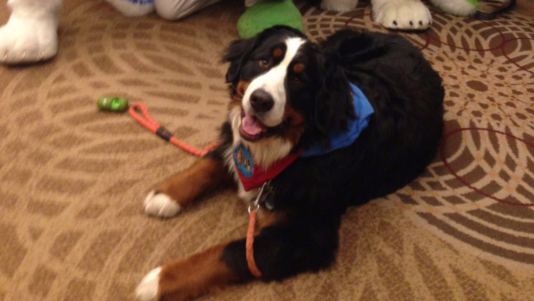 Link, the therapy dog, feeling good about the furry convention.