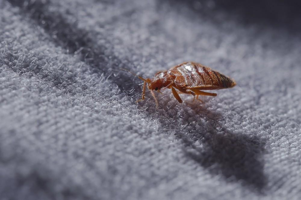 Detroit Has A Bed Bug Problem News Hits