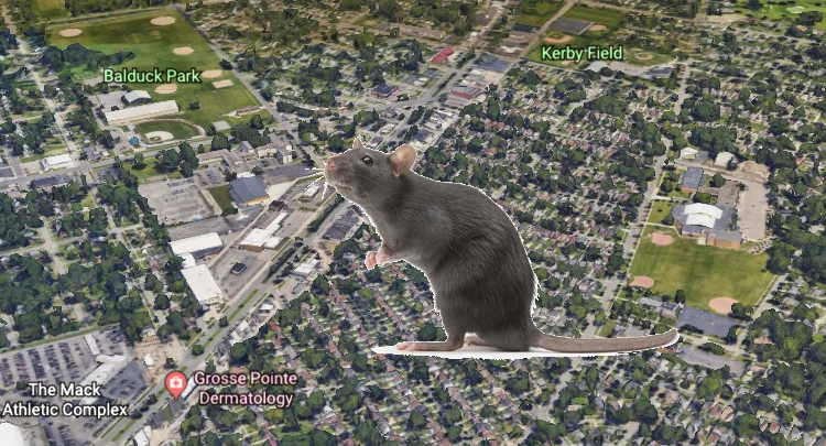 rat_image_from_shutterstock_map_image_courtesy_google_earth.png