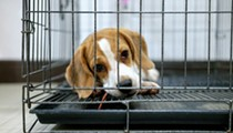 Humane Society alleges Michigan animal lab force-fed beagles fungicides