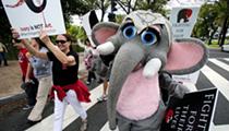 Global March for Elephants heads for Royal Oak