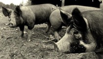 Enjoy a nose to tail pork dinner by Republic butcher Larissa Poppa, support the local farm-to-table movement