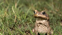 This weekend: Learn about frogs and toads, and help the Rouge River