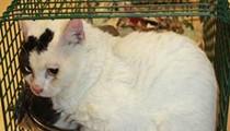 Hoarded Ypsilanti cats need homes