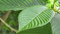 White Borneo Kratom: A Natural Mood Booster