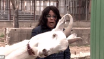 This video of goats going wild with WDIV's Paula Tutman is amazing