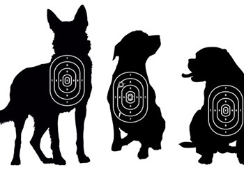 Why are Detroit cops killing so many dogs?