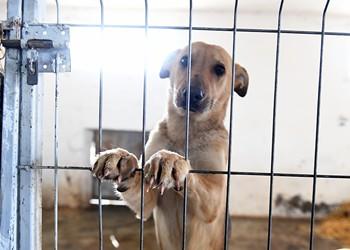 Metro Detroit shelter is taking in animals from Hurricane Harvey