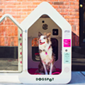 You can now keep your dog inside an air-conditioned chamber in Ferndale