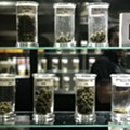 Why recreational marijuana likely won't be available for sale until spring