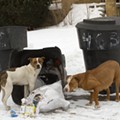 Detroit unveils plan to get a handle on dangerous dogs and negligent owners