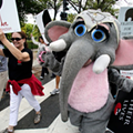 Global March for Elephants heads for Royal Oak
