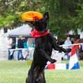 Take your furry friend out and about in Royal Oak