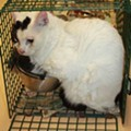 Hoarded Ypsilanti cats need homes
