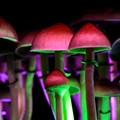 Ann Arbor to consider decriminalizing psychoactive mushrooms, plants