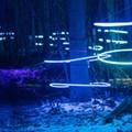 Michigan illuminated forest updates for trippy winter strolls