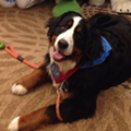 Michigan woman and her dog unwittingly attend furry convention and adorable hilarity ensues