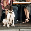 Royal Oak's Bastone Brewery's patio is now dog-friendly featuring new doggy menu