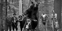 03b52bb7_romanian-film-festival-the-bear-ursul-dan-chisu-4.png