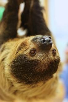 ba815f4e_sloth.jpg