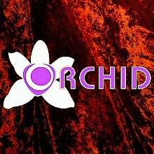 18772dd6_orchid.jpg