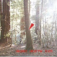 BIGFOOT TRAPPED BY NORCAL FANATIC! 6:07 p.m.—no chicken, slight jostling and possibly a shoulder leaving the picture (squint and look real hard) in the last frame.